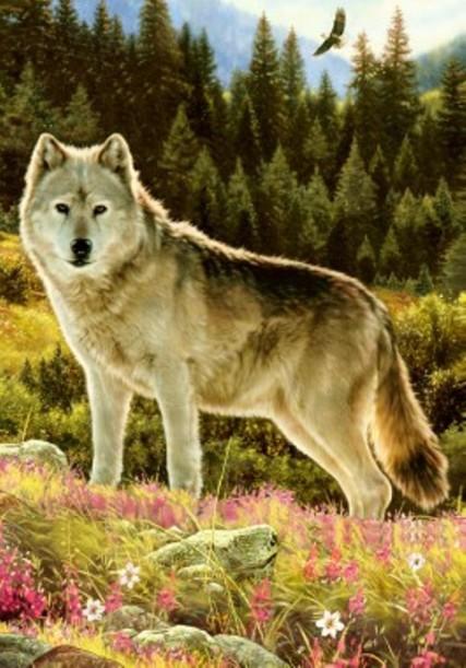 Wolf Summer 0873